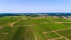 Foto aerea delle vigne in Monnieres Fotografia Stock Libera da Diritti