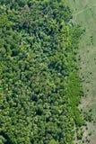 Foto aerea, foresta, prato Fotografia Stock
