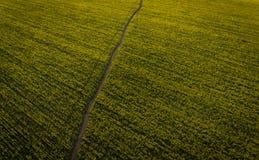 Foto aeree del seme oleifero giallo Fotografia Stock Libera da Diritti