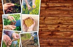 Foto agricola del collage di attività e di occupazione Immagini Stock