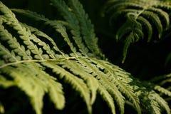 Foto alta vicina di alcune piante della felce fotografie stock libere da diritti