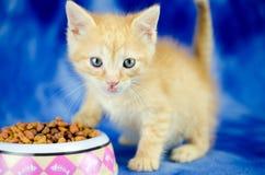 Foto anaranjada de la adopción del animal doméstico del gatito Foto de archivo libre de regalías