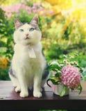 Foto ascendente cercana del gato en el jardín con la flor Imagen de archivo