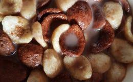 Foto ascendente pr?xima dos flocos de milho da baunilha e do chocolate mergulhados no leite de chocolate fotos de stock
