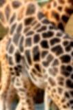 Foto astratta che mostra una pelle della giraffa per un fondo Fotografia Stock