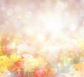 Foto astratta del giacimento di fiore selvaggio e delle luci luminose del bokeh Immagine Stock Libera da Diritti