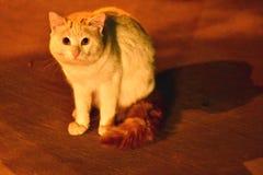 Foto asustada del gato usando luz de la madrugada en la ciudad de Dammam de la Arabia Saudita Fotografía de archivo