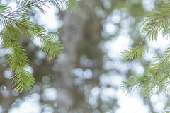 Foto através das árvores Fotografia de Stock
