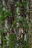 Foto auf Lager der Baumrinde stockfoto