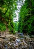 Foto av bergfloden som flödar till och med den gröna skogen Royaltyfri Foto