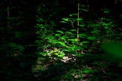 Foto av busken i en grön skog Royaltyfri Fotografi