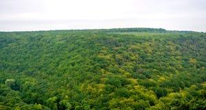 Foto av den flyg- sikten för grön skogpanorama i genomdränkt dag Royaltyfri Bild