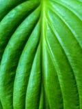 Foto av den gröna bladblomman Fotografering för Bildbyråer