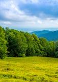 Foto av den gröna skogen och dalen i Carpathian berg Arkivbilder