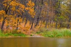 Foto av den orange höstskogen med sidor nära sjön Royaltyfri Bild