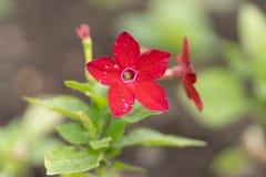 Foto av den röda blomman på gräsbakgrund i mjuk fokus arkivfoton