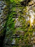 Foto av den våta stenen som täckas med ny grön mossa i Carpathian berg Royaltyfri Fotografi
