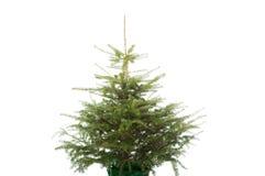 Foto av det undecorated julträdet Fotografering för Bildbyråer