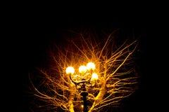 Foto av en antik lykta på natten med ett illavarslande naket träd i bakgrunden arkivfoto
