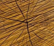 Foto av en brun textur av ett tvärsnitt av trädet Royaltyfri Bild