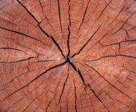 Foto av en brun textur av ett tvärsnitt av trädet Arkivfoton