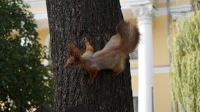 Foto av en ekorre på ett träd arkivbild