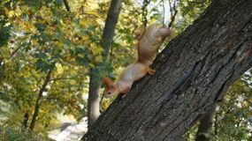 Foto av en ekorre på ett träd royaltyfri bild