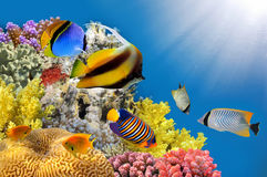 Foto av en korallkoloni på en revöverkant Arkivbilder
