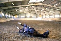 Foto av en rullning för sadelhäst i dammet på den tomma ridningkorridoren Royaltyfria Bilder