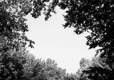 Foto av ett stort mellanrum bland träd i en svartvit grön skog Arkivbild