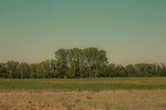 Foto av ett träd eller grupp av träd i avståndet Royaltyfria Foton