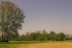 Foto av ett träd eller grupp av träd i avståndet Arkivfoto