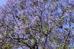 Foto av ett träd med purpurfärgade blommor arkivbild
