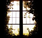 Foto av fönstret till naturen Arkivbild