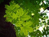 Foto av filialen i en grön skog Arkivbilder