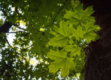 Foto av filialen i en grön skog Arkivfoto