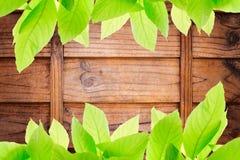 Foto av gräsplansidor på träsnittväggtextur arkivfoto