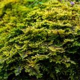 Foto av grön mossa i skog i Carpathian berg Royaltyfri Foto