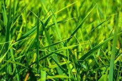 Foto av grönt gräs på sommardagen Royaltyfria Bilder