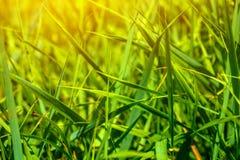 Foto av grönt gräs på sommardagen Royaltyfri Fotografi