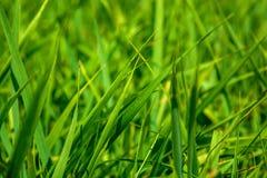 Foto av grönt gräs på sommardagen Fotografering för Bildbyråer