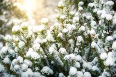 Foto av gran som täckas i snö mot den glänsande solen Arkivbild