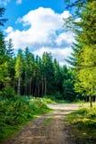 Foto av grusvägen i skog i Carpathian berg Arkivfoto