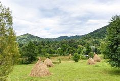 Foto av höbuntar på gröna fält Royaltyfria Bilder