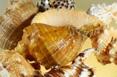 Foto av havsskal Fotografering för Bildbyråer