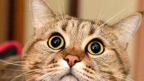 Foto av katten Royaltyfri Fotografi