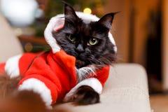 Foto av katten för ` s för nytt år i dräkt för jultomten` s royaltyfria foton