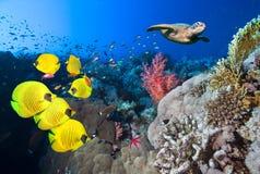 Foto av korallkolonin royaltyfria foton