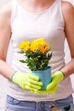 Foto av kvinnan i rubber handskar som rymmer krukan med den gula blomman Royaltyfri Foto