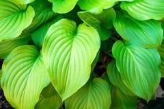 Foto av många härliga gröna blommasidor, naturbakgrund Royaltyfri Foto